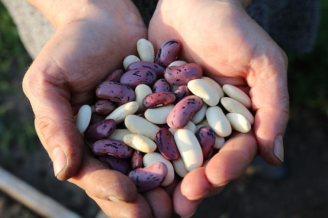 fazole v dlani